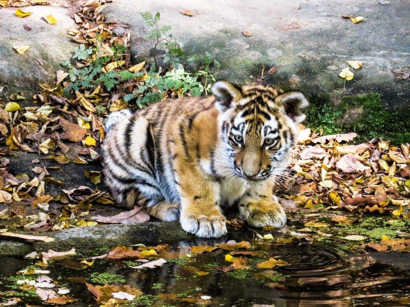 Salviamo le #tigri dello zoo di Khartum